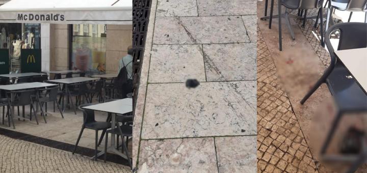 Homem mata pombo ao soco e arranca-lhe a cabeça no Rossio depois do animal tirar uma batata frita ao filho de 3 anos
