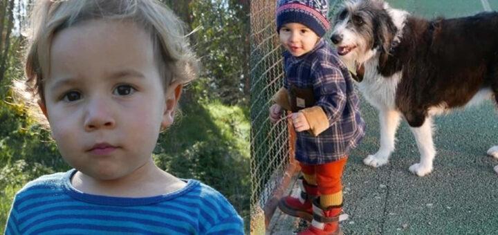 Família dá 500€ a quem encontrar menino de 2 anos desaparecido em Proença-a-Velha
